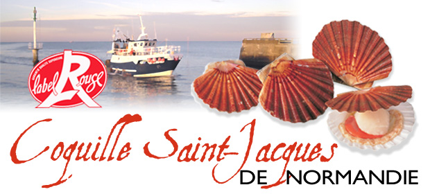 Coquille Saint-Jacques Normandie Label Rouge