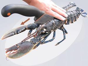entre homard et côte
