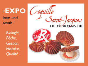 Expo Coquille Saint-Jacques de Normandie