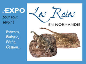 Expo Raies Normandie
