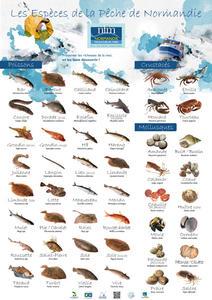 journal pêche en mer