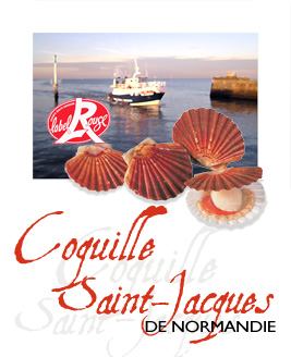 Affiche Coquille